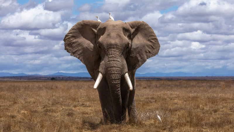 Avoiding the elephant traps when writing R&D reports